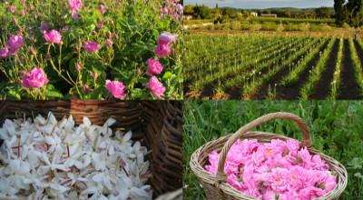 Plantes a parfum et savoir-faire: rendez-vous à l'Aromatic FABLAB